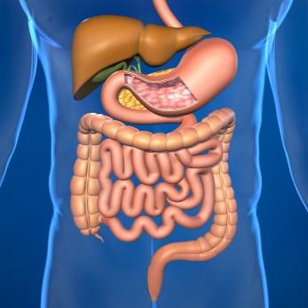 Detox For Optimal Health