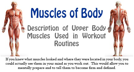 Fitness Tip Tuesday – Muscles of the Body – The Back Muscles