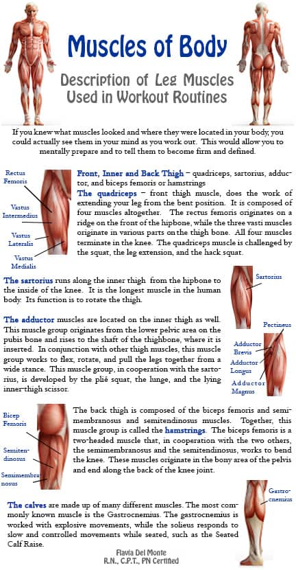 types-of-muscles-in-the-human-body