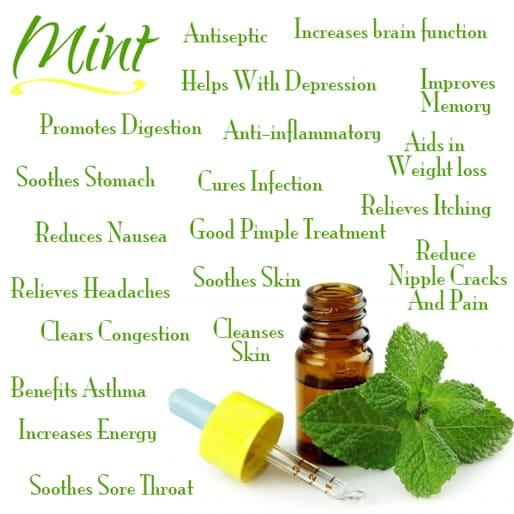 fresh mint health benefits
