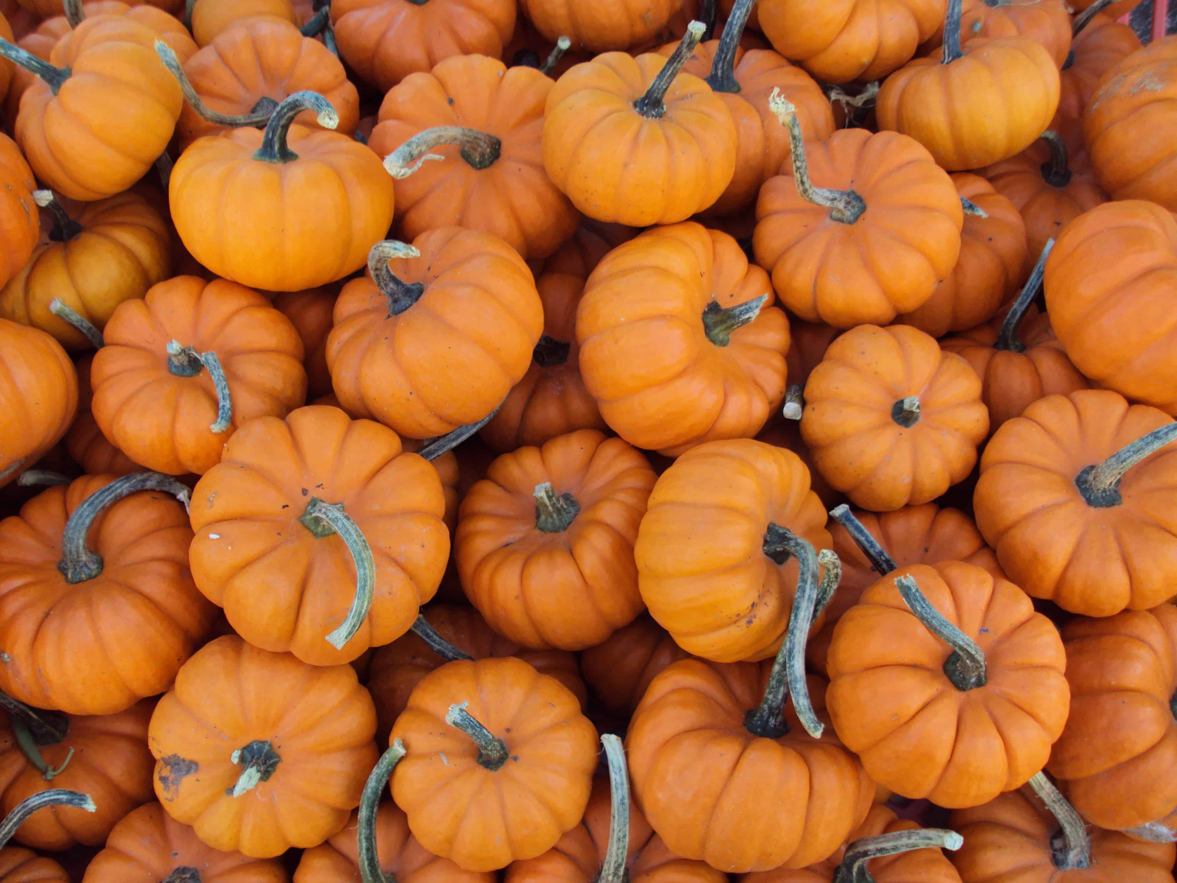 Pumpkin-Oat Energy Squares